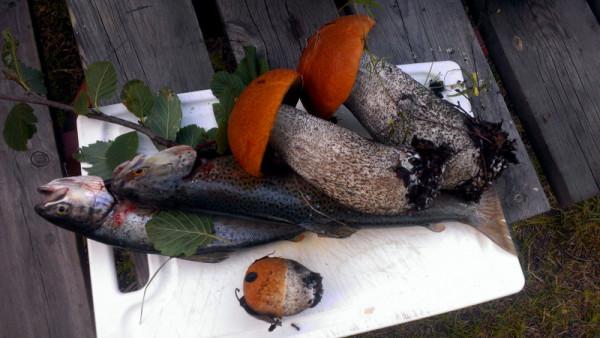 Грибы и рыба в Норвегии