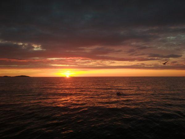 Заказт на рыбалке в море тур Норвегия